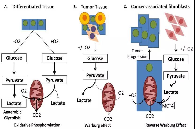 《重温诺奖系列推文(一)氧感应系统与糖代谢调节》
