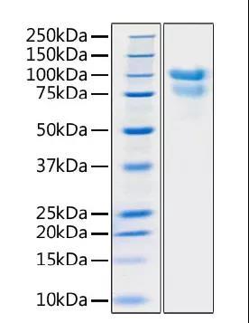 《新品发布 | SARS-COV-2重组蛋白》