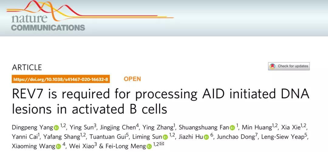 《孟飞龙研究组Nature Communications揭示REV7蛋白在维持激活态B细胞生存中的新功能》