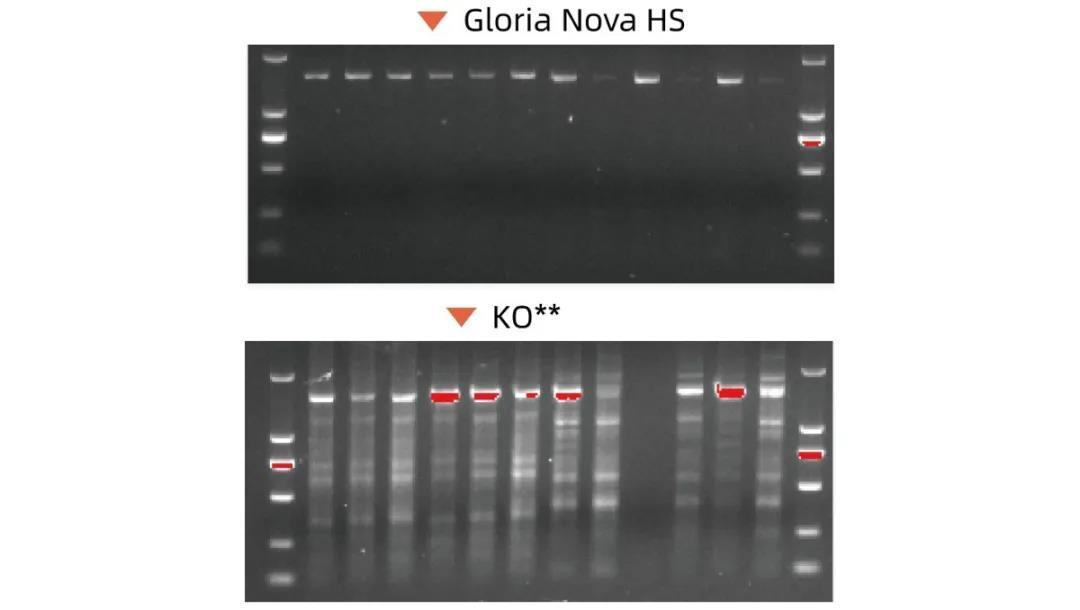 《活动 | 反馈Gloria Nova HS高保真DNA聚合酶数据赢精美礼品》
