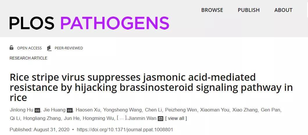 《文献解读 | 万建民院士团队揭示JA和BR信号调控水稻抗条纹叶枯病新机制》
