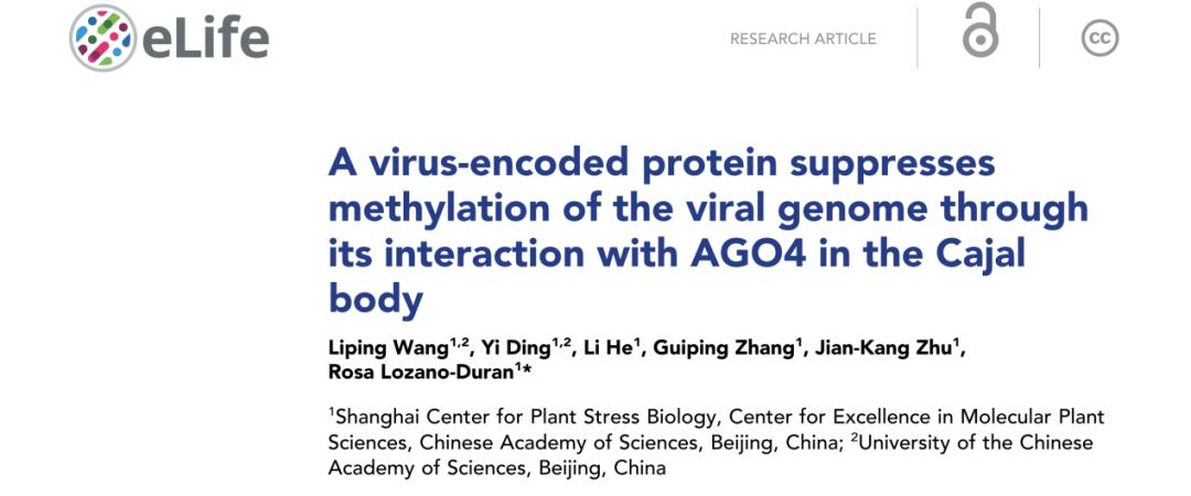 《上海植物逆境中心Rosa Lozano-Duran研究组破译了植物病毒与宿主围绕卡哈尔体(Cajal body)的博弈新机制》