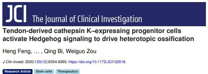 《文献解读 | 邹卫国组鉴定肌腱前体细胞新亚型并成功建立异位骨化模型》