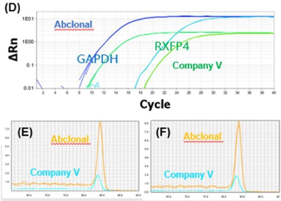 《新型冠状病毒来袭,ABclonal提供诊断解决方案及科研抗体产品》